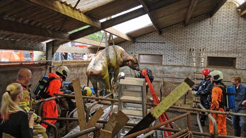 Brandweer Soesterberg bij redding dieren